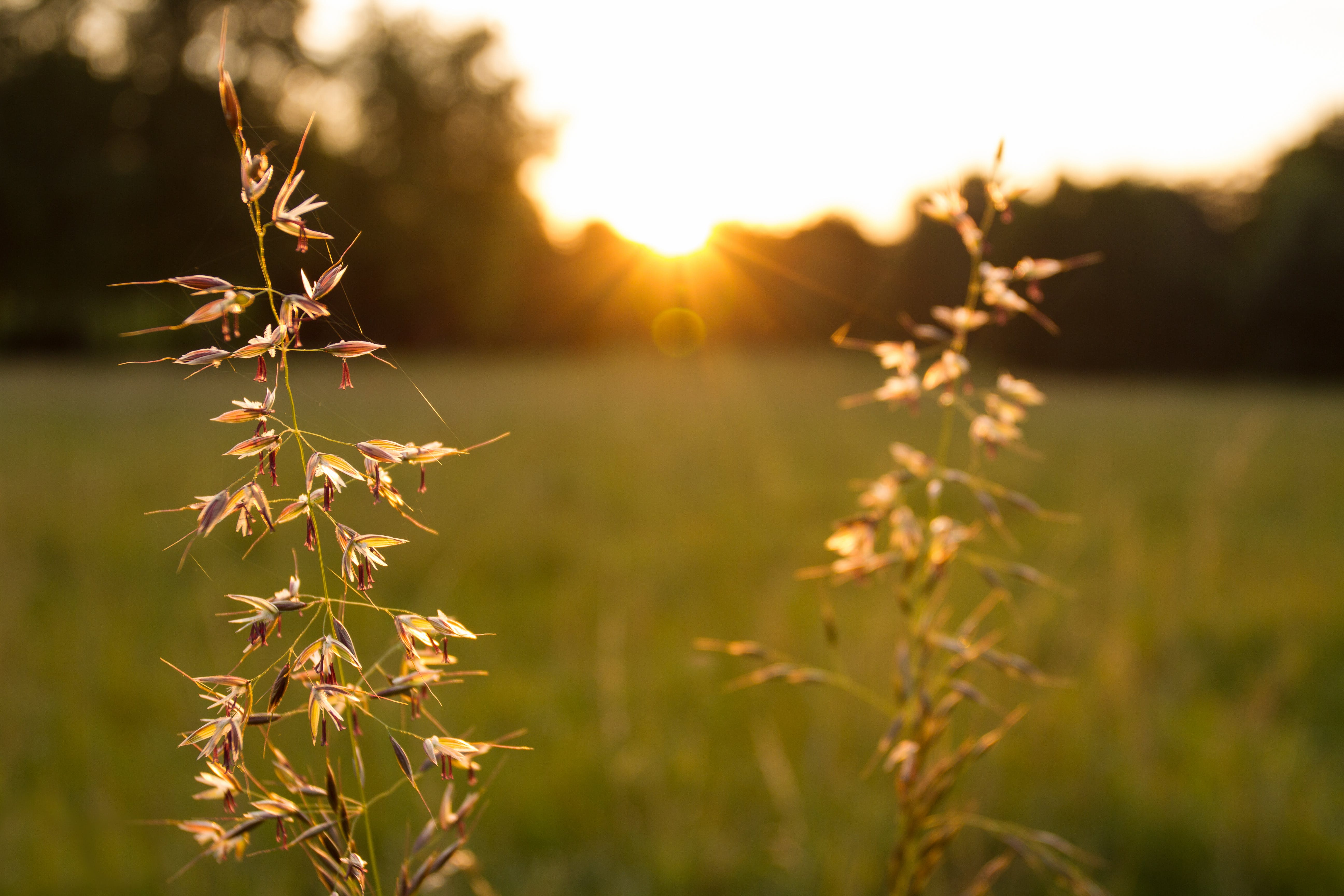 Free stock photo of abendstimmung, close-up view, evening sun, evening-sky