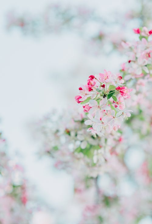 Pink and White Flower in Tilt Shift Lens