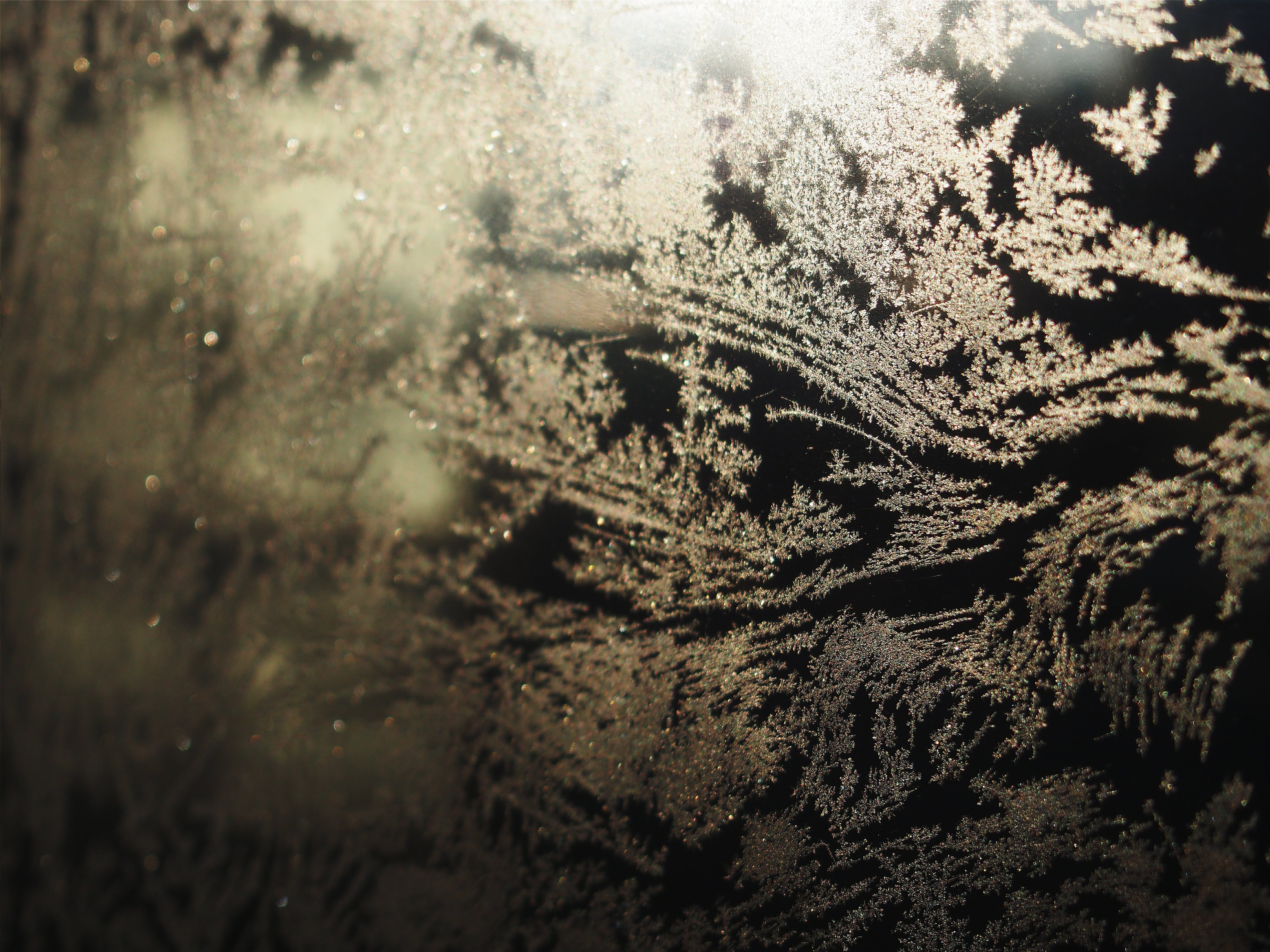 Free stock photo of winter, painting, window, frost