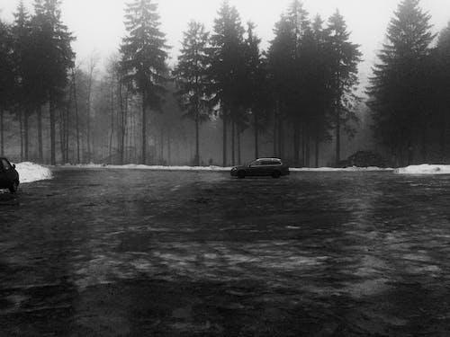 Darmowe zdjęcie z galerii z czarno-biały, las, samochód
