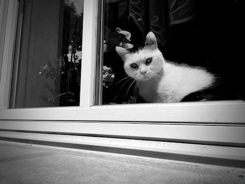 Darmowe zdjęcie z galerii z czarno-biały, kot