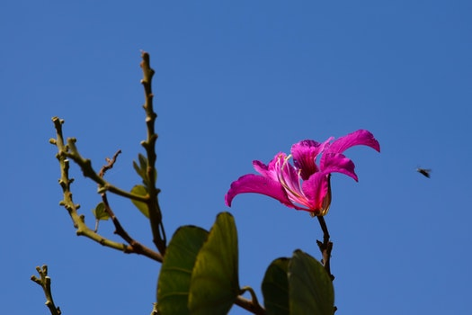 Free stock photo of drosera, beautiful flowers