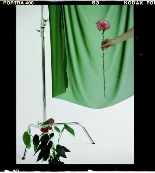 Immagine gratuita di analogico, aromatico, arredamento