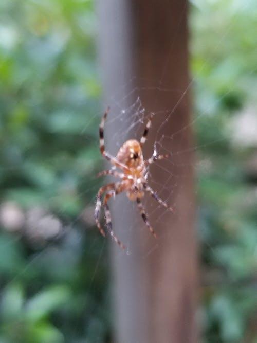 樹, 蜘蛛, 蜘蛛網 的 免费素材图片