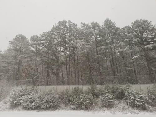 冬季, 樹木, 雪 的 免费素材图片
