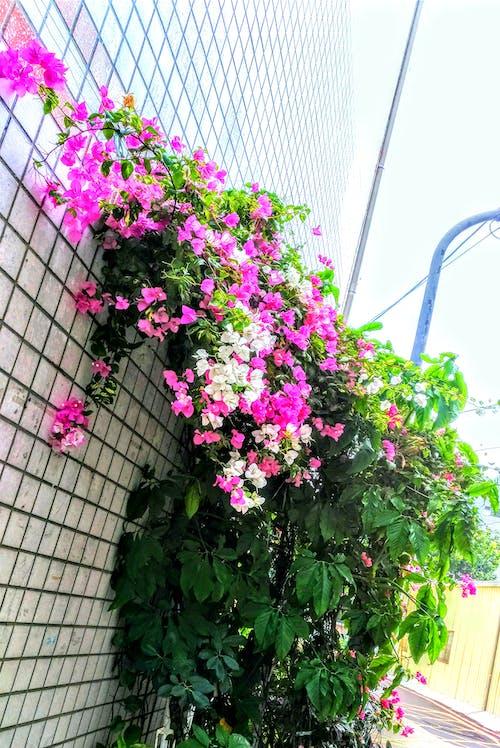 Free stock photo of 休閒, 牆角, 盆栽