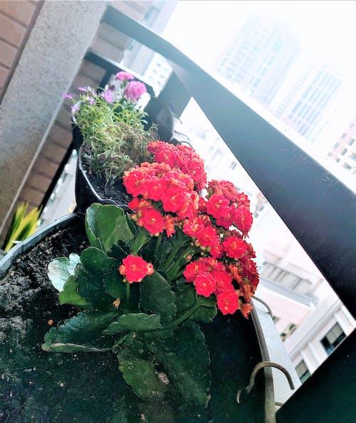 Безкоштовне стокове фото на тему «休閒, 牆角, 花朵»