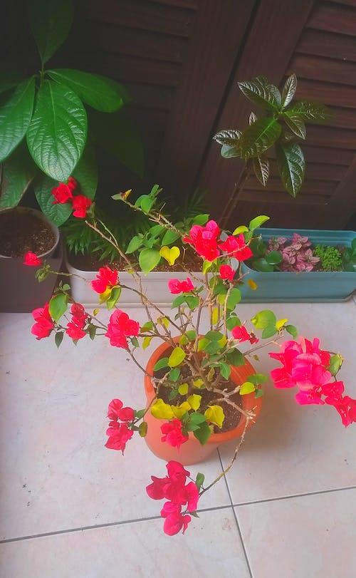 休闲, 墙角, 盆栽 的 免费素材图片