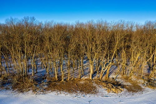 Brown Leafless Trees on Snow Covered Ground Under Blue Sky
