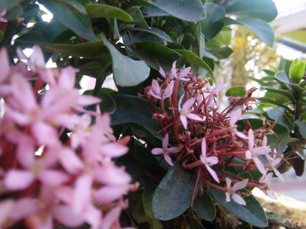 Photo Gratuite De Balcon Fleur De Jardin Fond D Ecran Gratuit