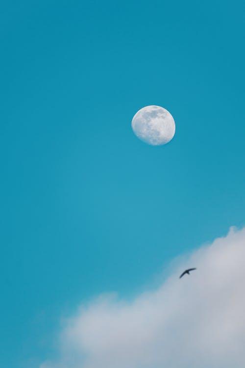 Základová fotografie zdarma na téma bílé mraky, divočina, let