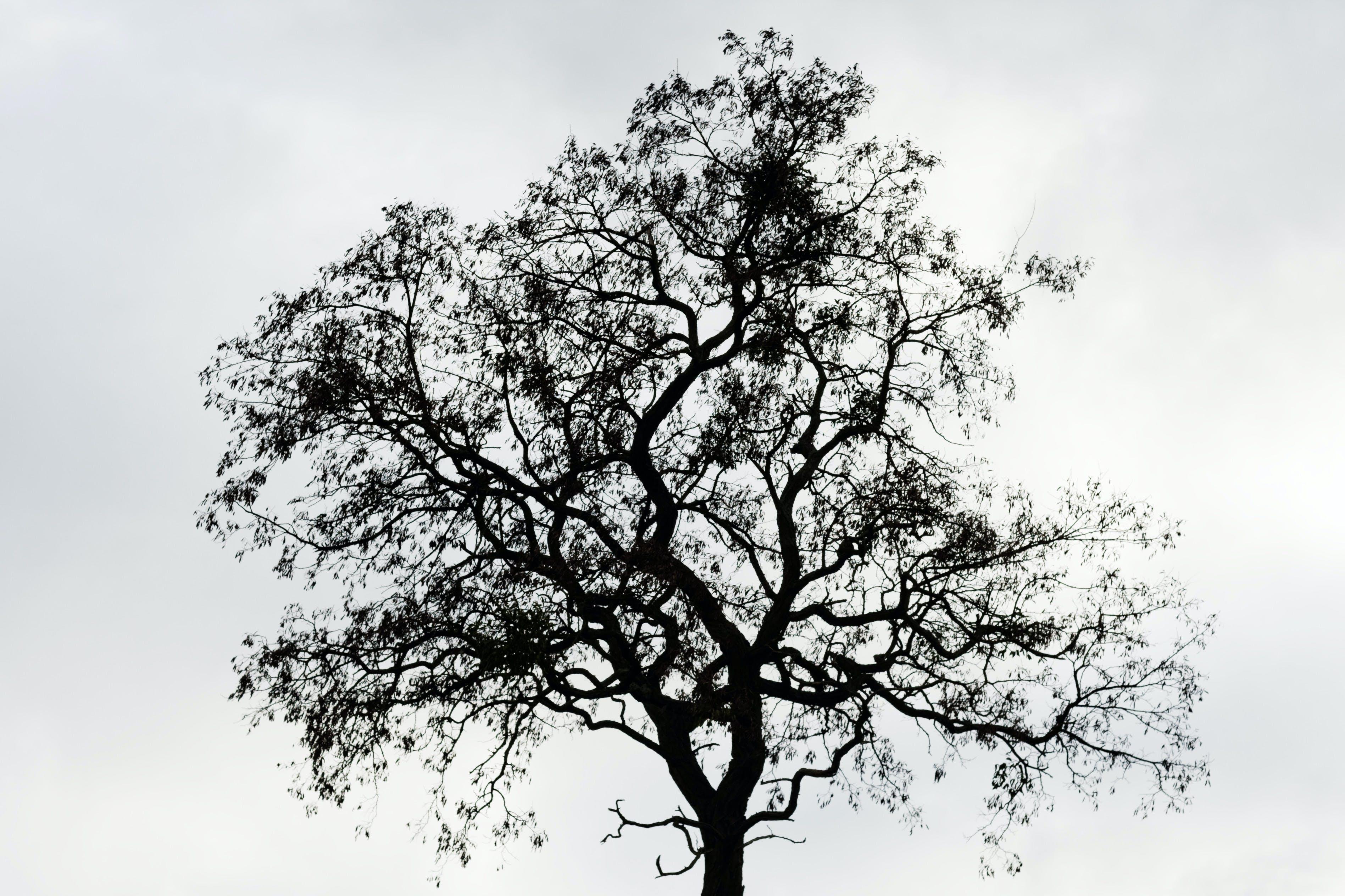 Free stock photo of nature, tree