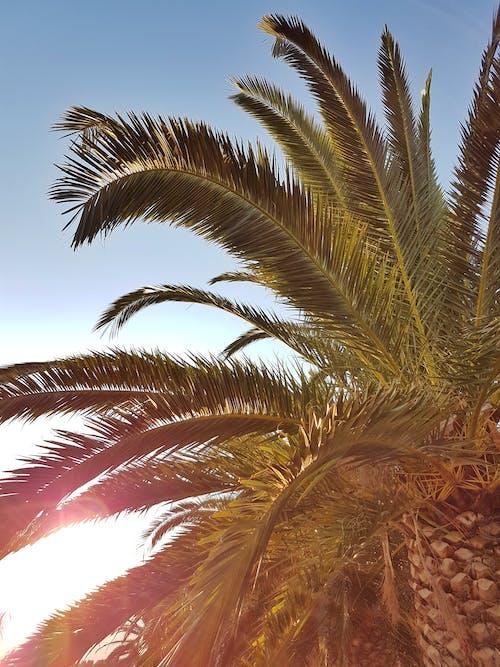 Бесплатное стоковое фото с идиллический, красивый, пальма, пальмовое дерево