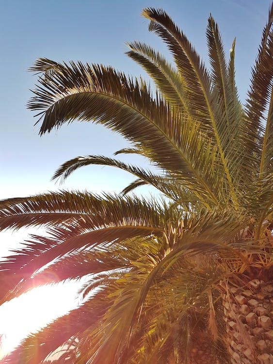 Foto Pohon Palem Hijau