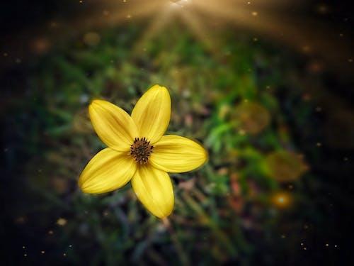 Free stock photo of blossom, close up flower, closeup