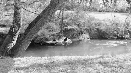 Darmowe zdjęcie z galerii z czarno-biały, morze, sztuka, woda