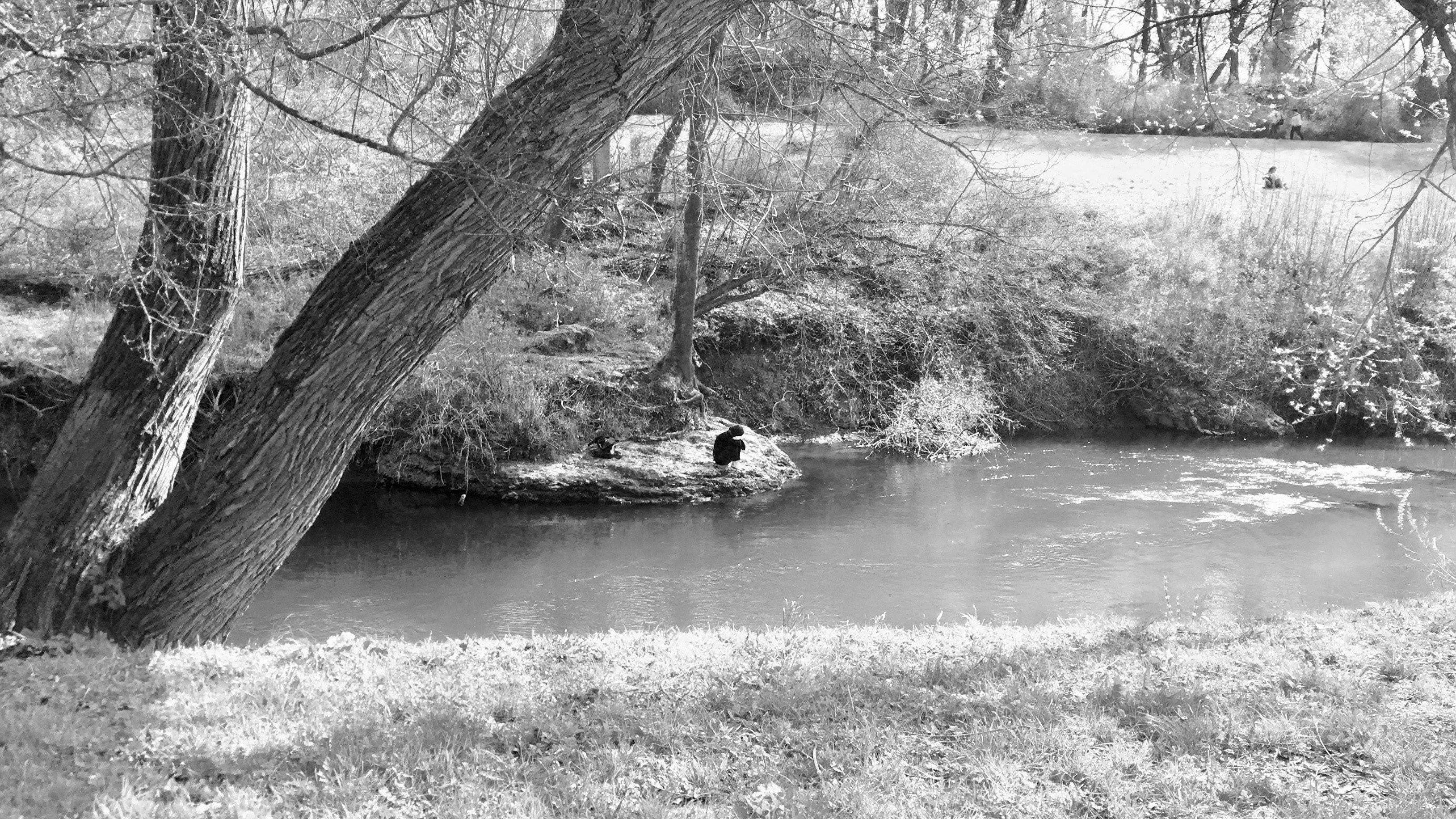 Free stock photo of art, black and white, sea