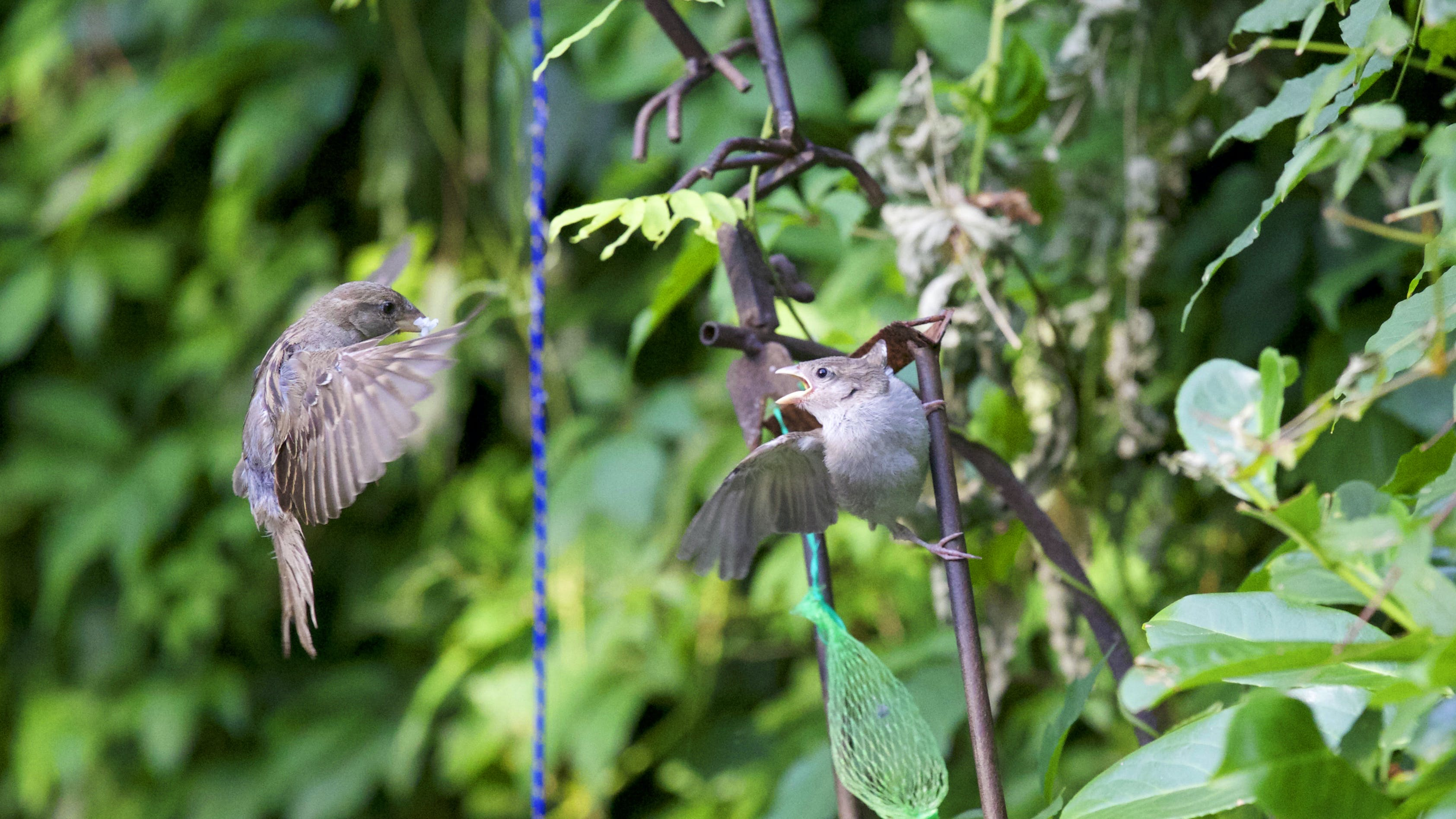 Gray Bird Flying during Daytime