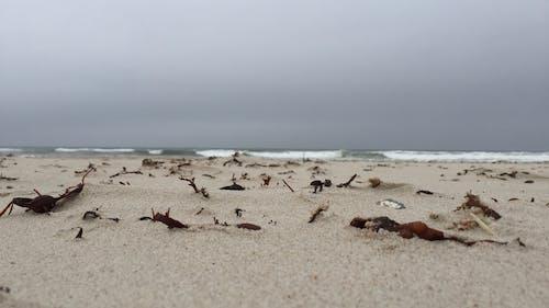 Darmowe zdjęcie z galerii z plaża, woda