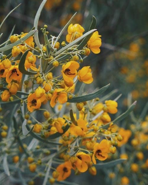 Free stock photo of arizona, beautiful flowers, blooming flowers