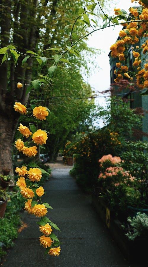 Free stock photo of beautiful flower, everything yellow, mellow yellow