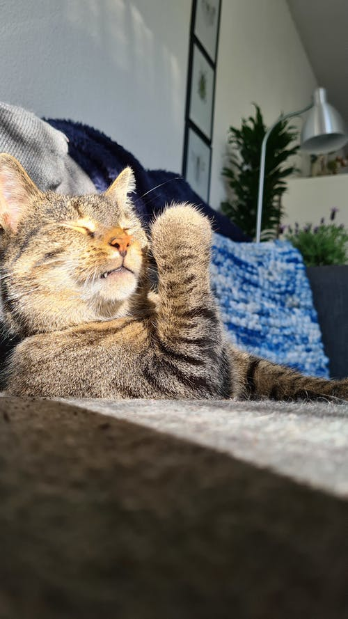 Free stock photo of catching sun, chilling, eyes closed