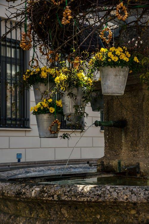 シティ, 墓地, 家の無料の写真素材