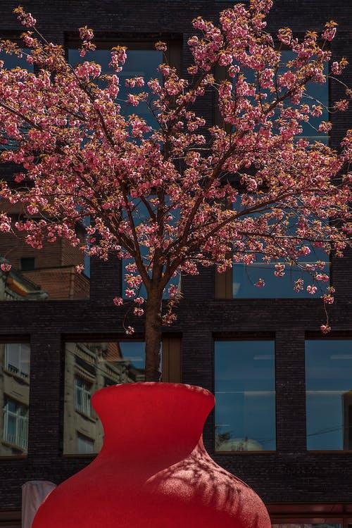 アート, シティ, パークの無料の写真素材