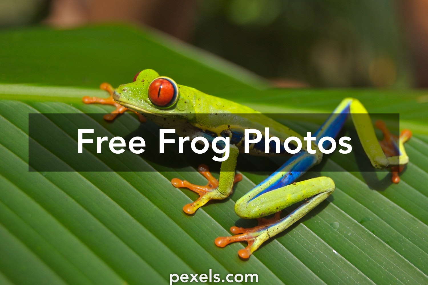 63 Sharp Frog Pictures · Pexels · Free Stock Photos
