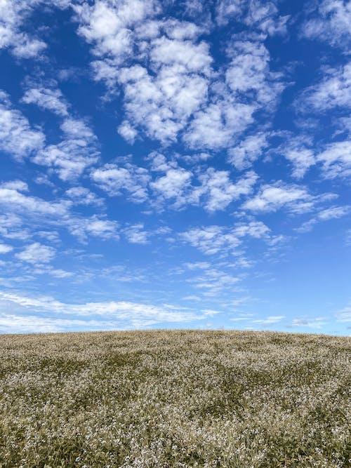 Free stock photo of blue sky, bright, cloud