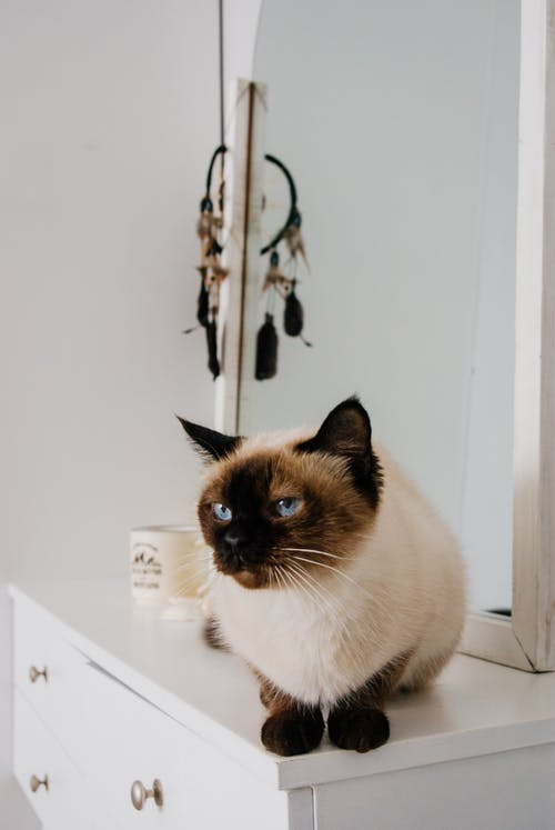 Obedient cat with blue eyes sitting on white commode with mirror in light room in daytime