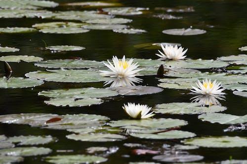 bitki örtüsü, Çiçekler, göl içeren Ücretsiz stok fotoğraf