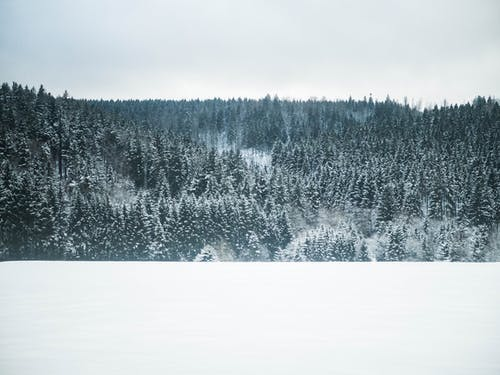 Foto profissional grátis de árvores, branco, cênico, clima