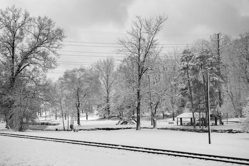 Snowy Tree Near Road
