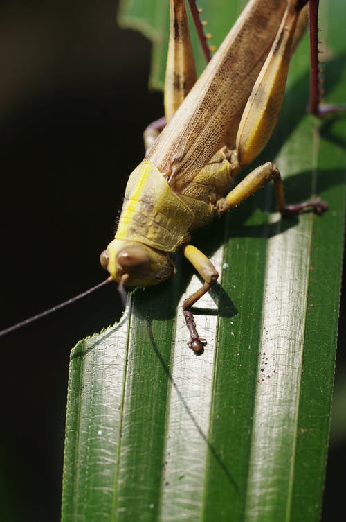 Free stock photo of locusts, nature