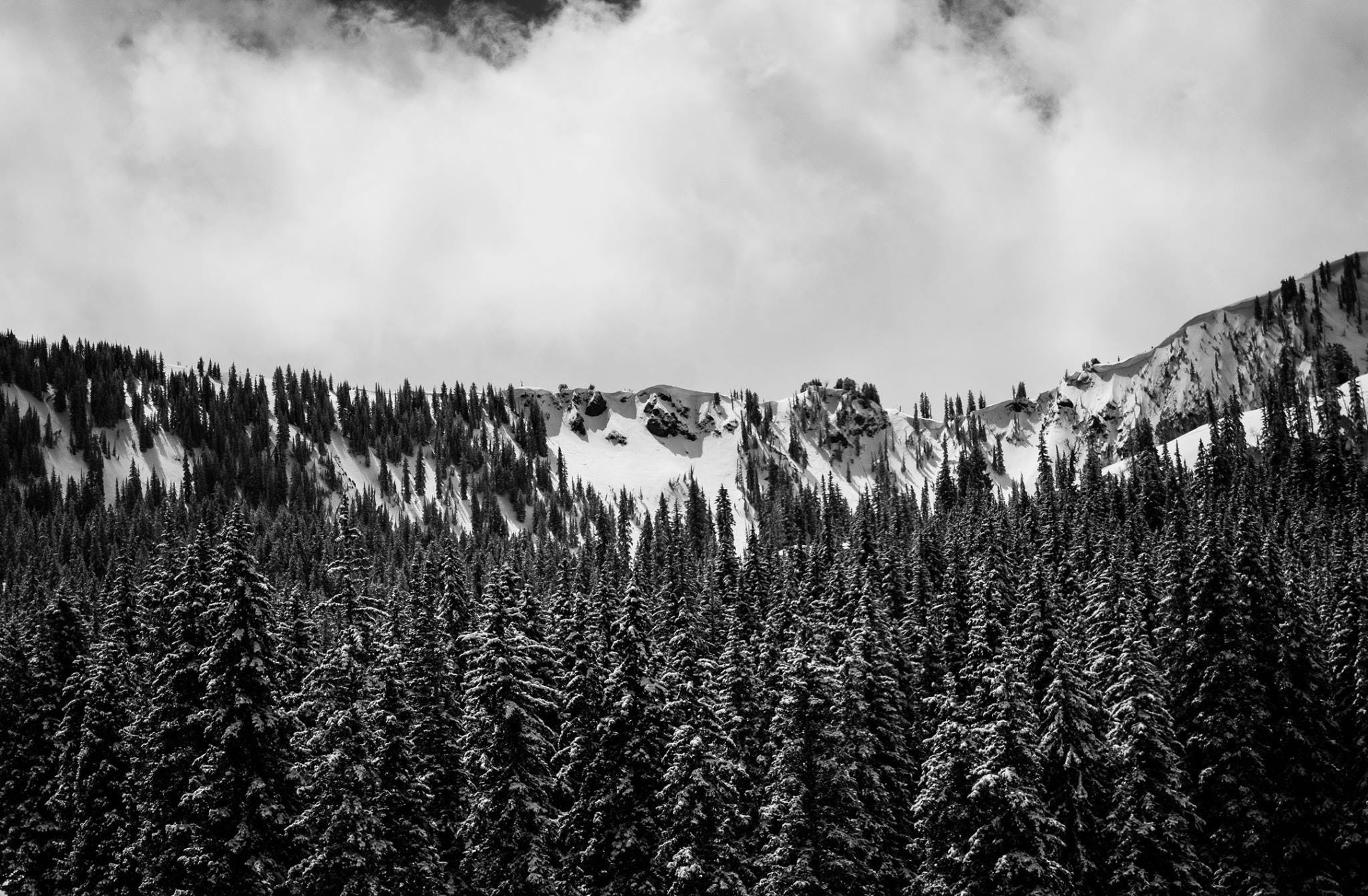 Free stock photo of black and white, forest, pine, snow