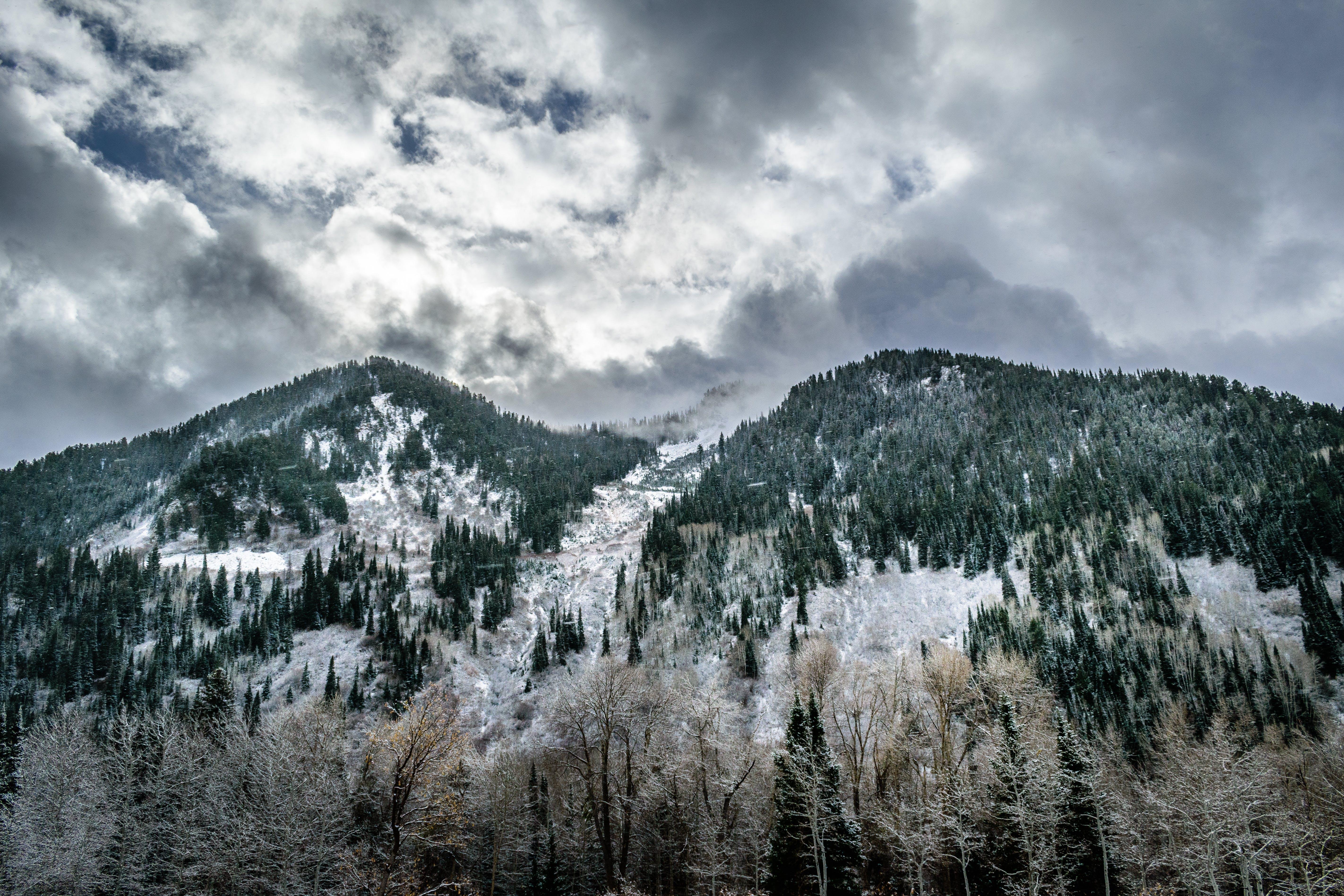 Fotos de stock gratuitas de arboles, bosque, cielo, conífera