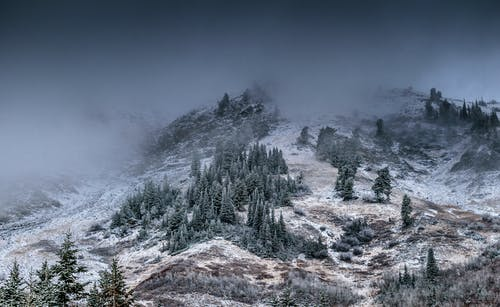 Foggy Mountain With Pine Trees