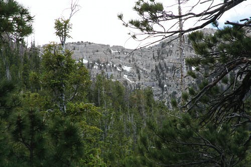 Foto d'estoc gratuïta de arbres de muntanya, cim, fosa de neu, muntanya
