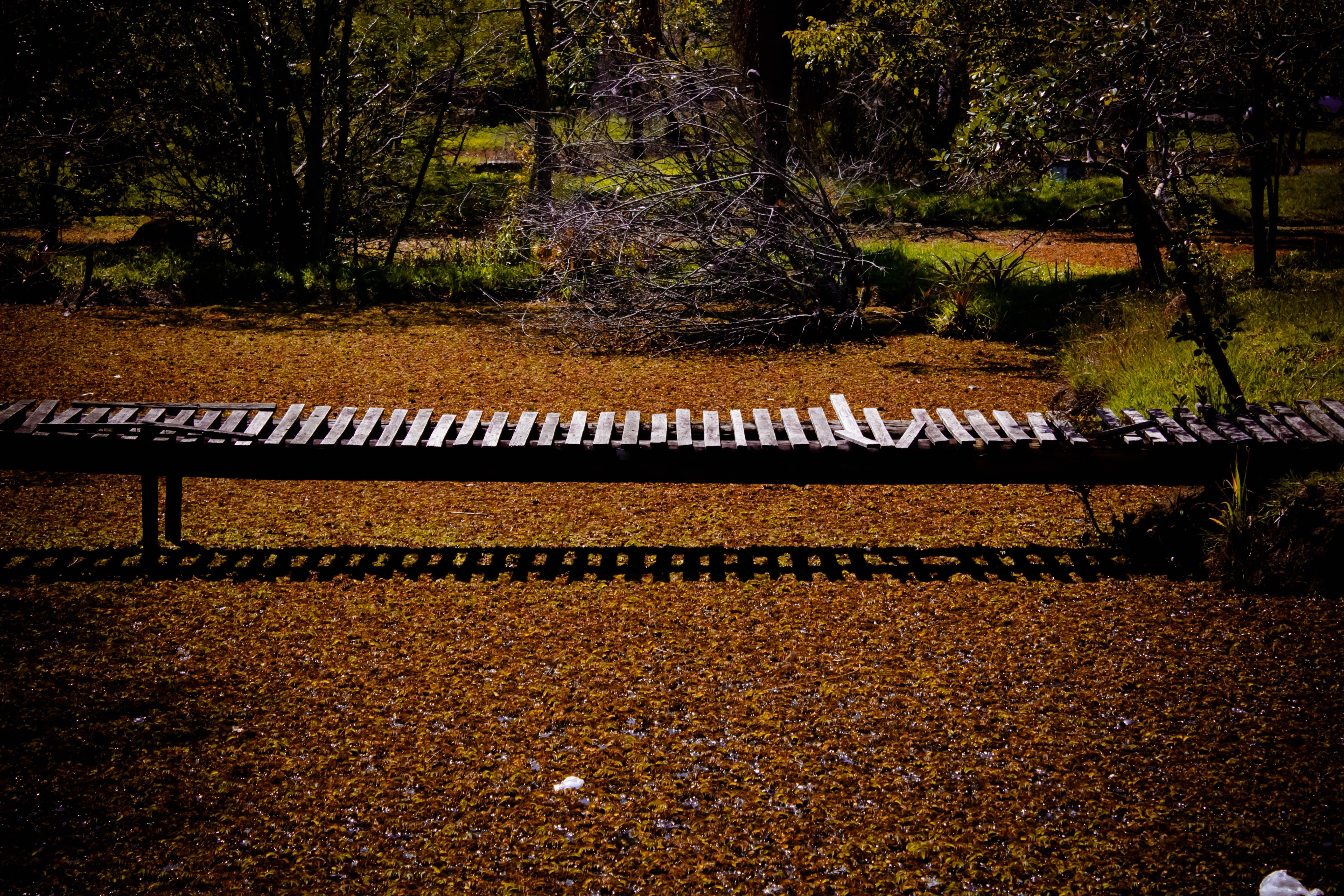 Free stock photo of bridge, day, design, nature