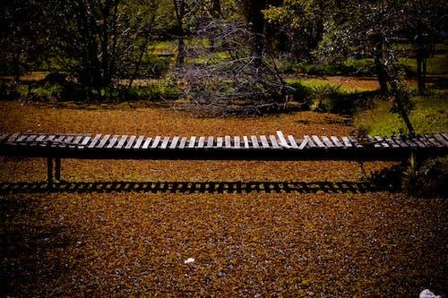 Gratis arkivbilde med bro, dag, design, natur