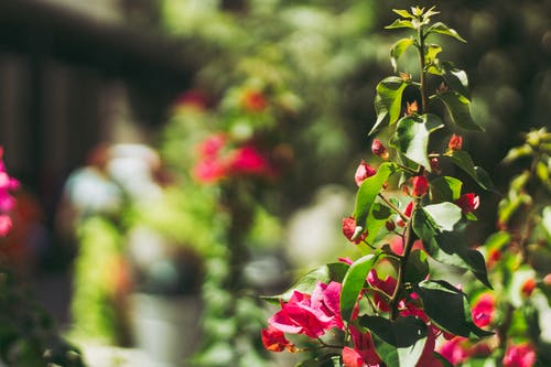 Macro Shot Of Pink Flowers