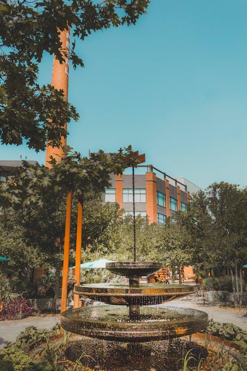 Immagine gratuita di acqua, alberi, architettura, città