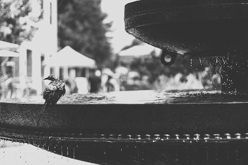 シティ, 噴水, 昼間, 木の無料の写真素材