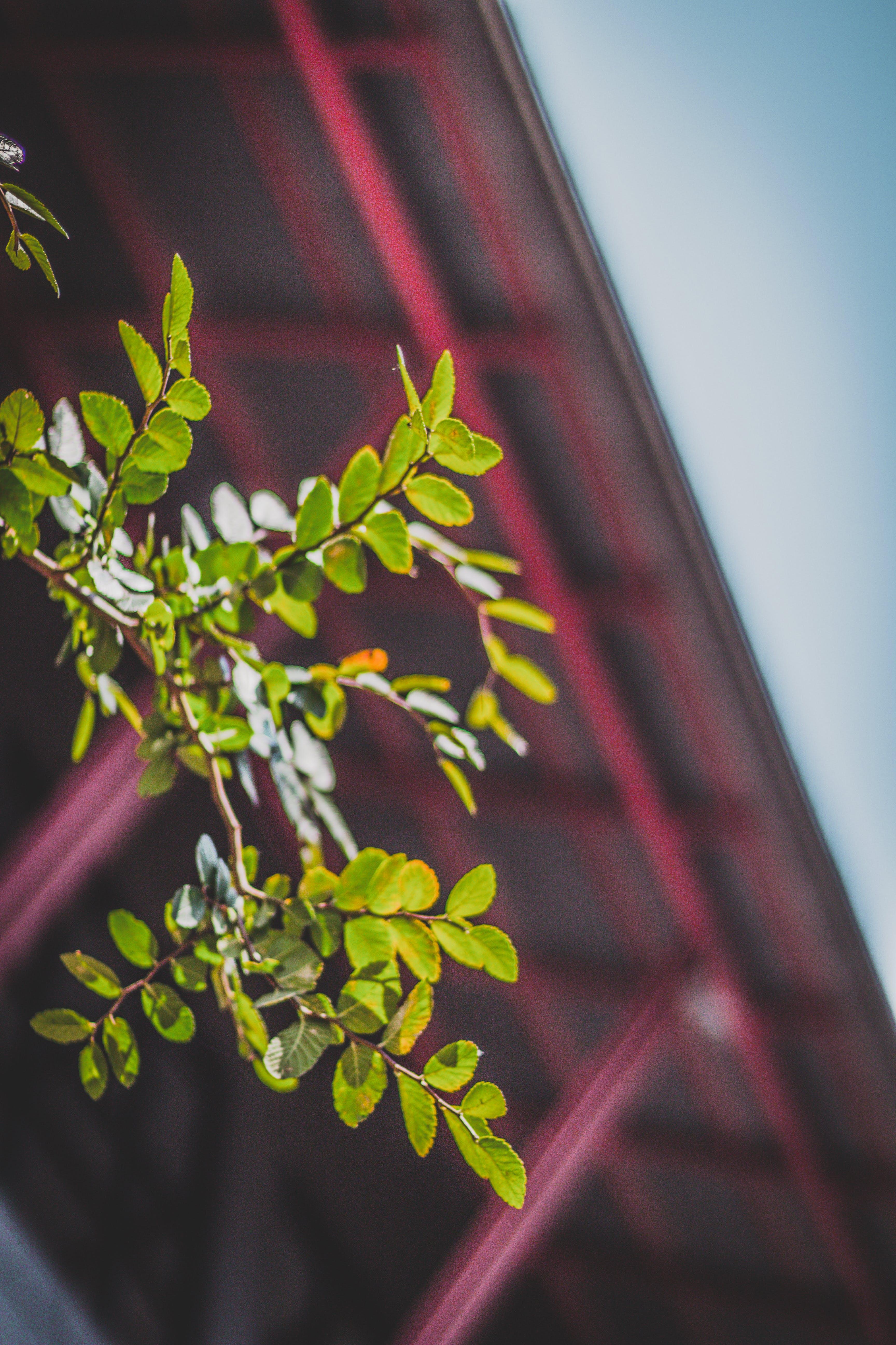 Macro Photograph of Green Leaf