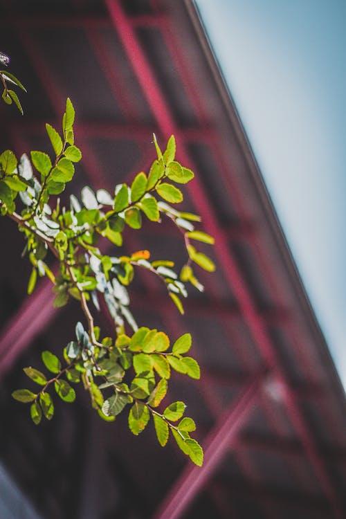 Gratis stockfoto met close-up, dak, groei, groen