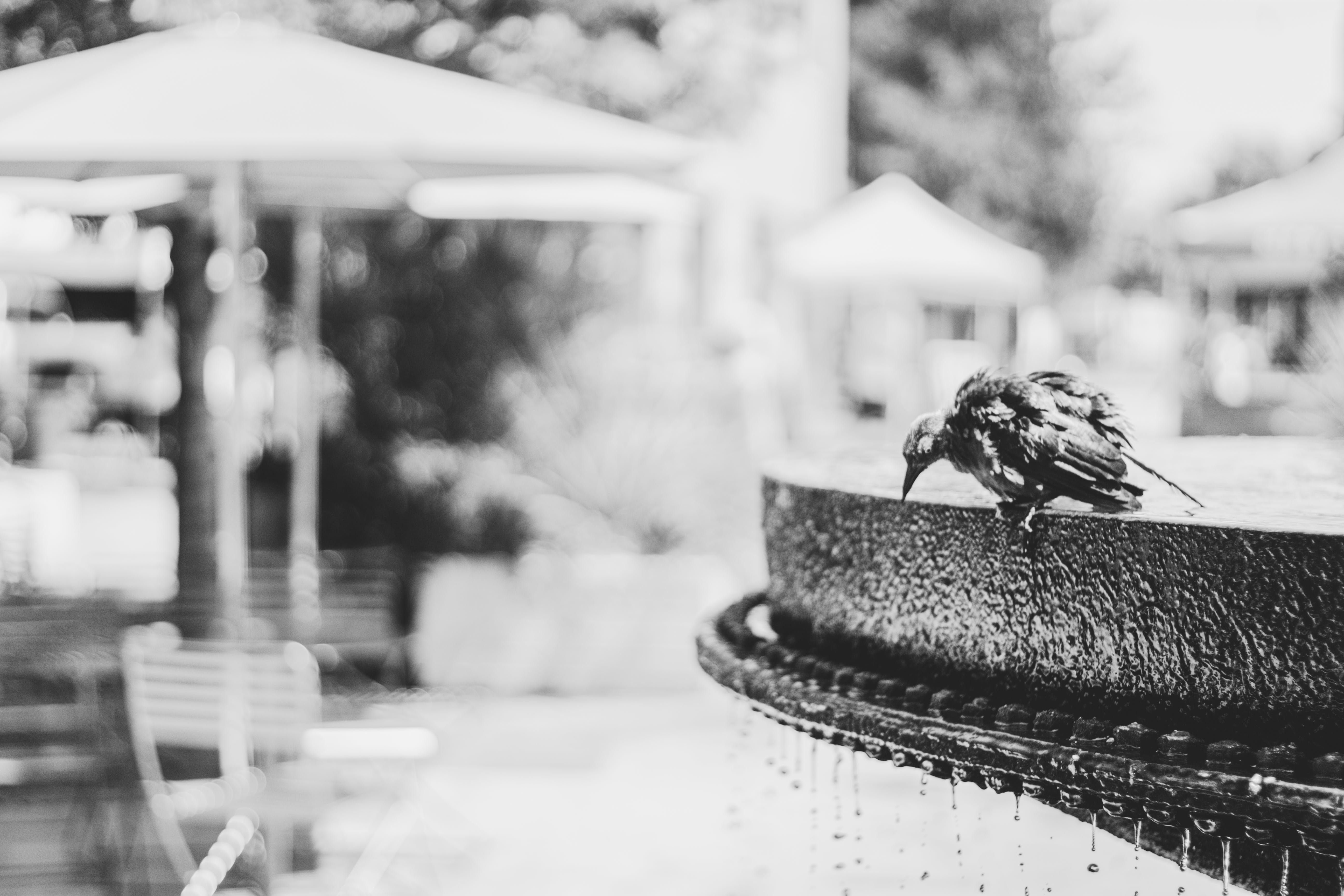 Grayscale Photo of Bird on Water Fountain