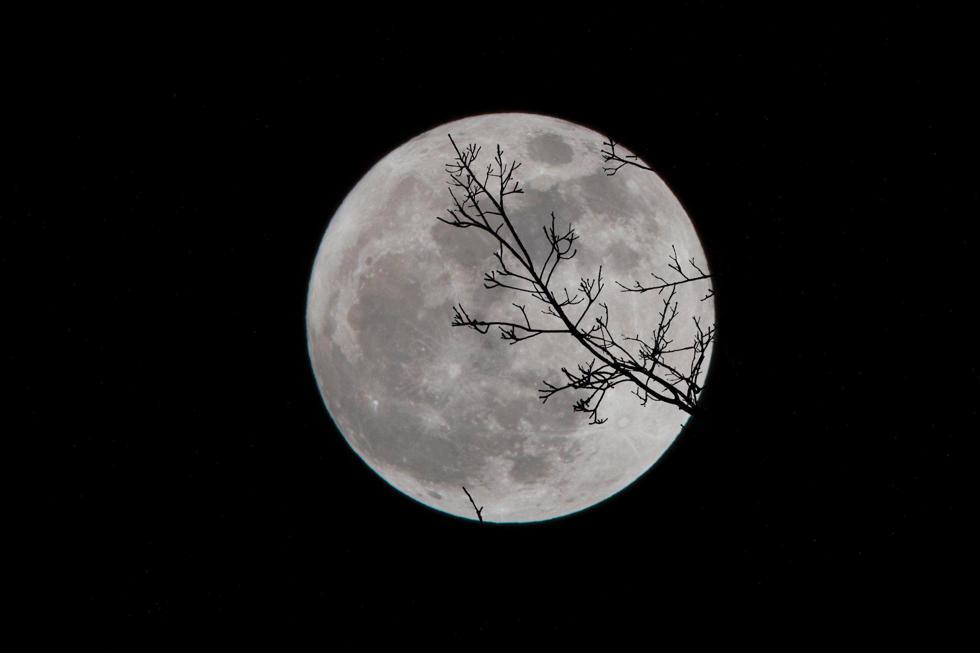 Free stock photo of silhouette, moon, full moon, super moon