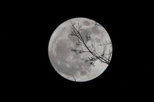 Gratis arkivbilde med fullmåne, måne, super måne, tre silhuett