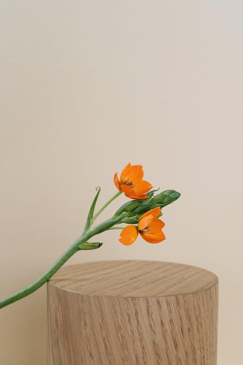 Gratis lagerfoto af blomster, flora, knopt